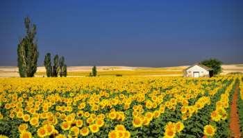 Tour Ouest de l'Ukraine