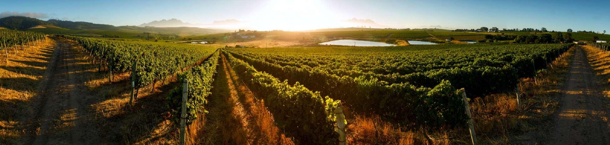 Mulderbsoch-Vineyards_panoramic