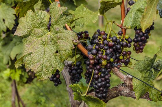 Shabo Winery